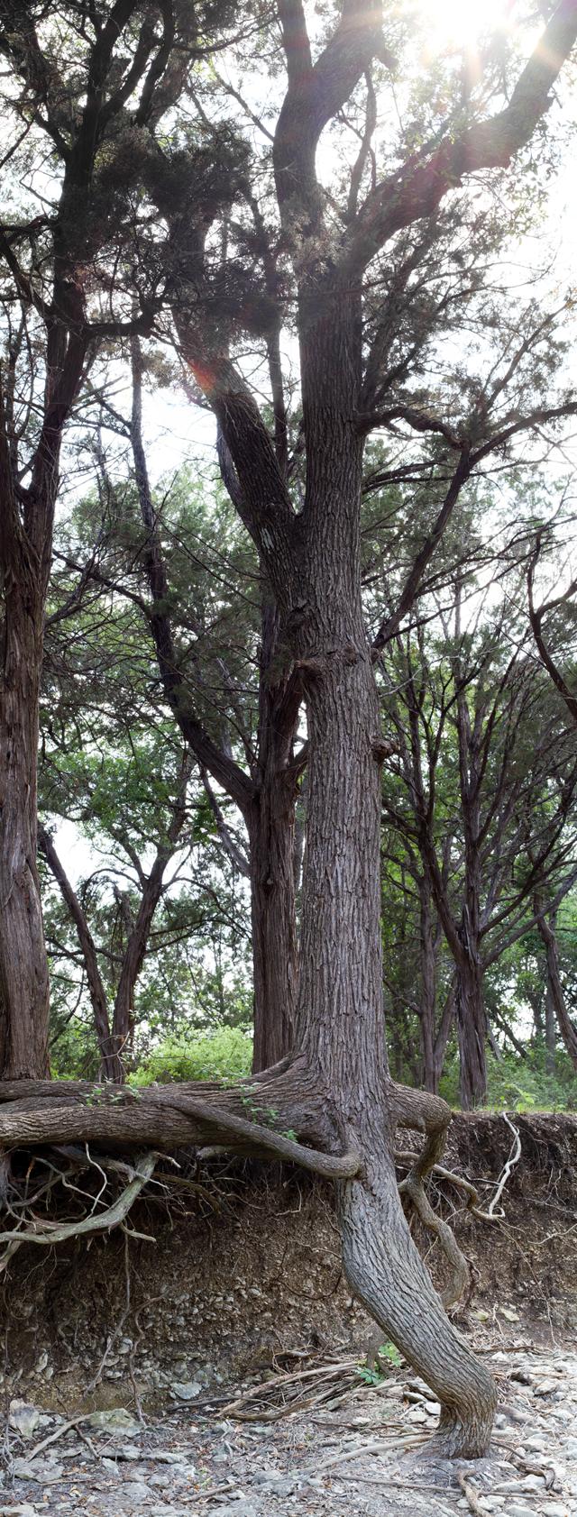 Hole 3 Tree