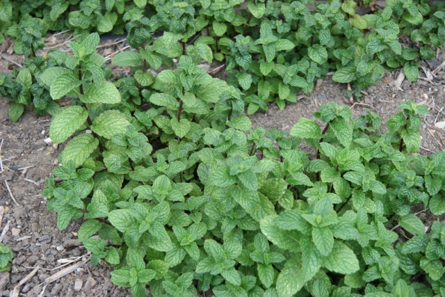 Seeded Garden #2