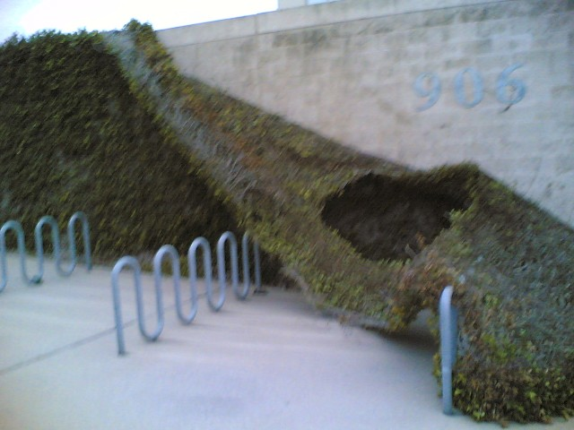 vine covered wall is falling