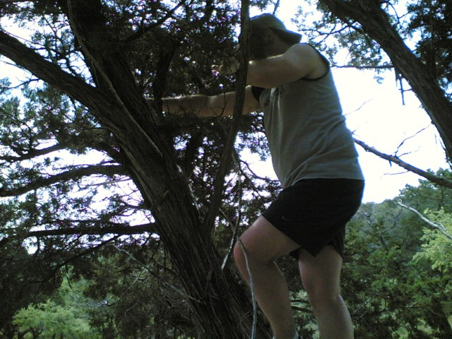 Jon in tree