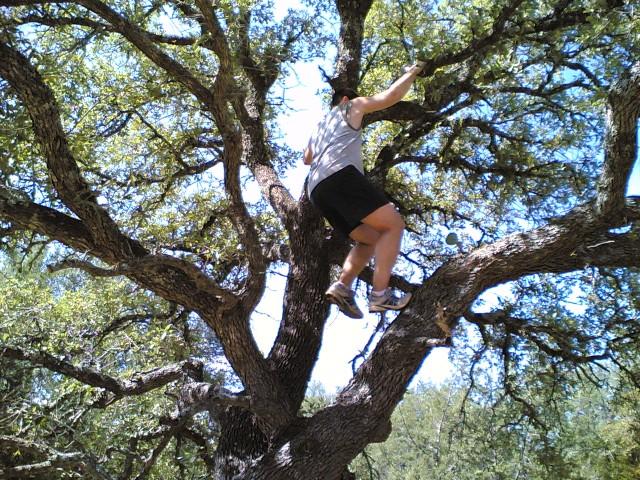 Jon climbs tree