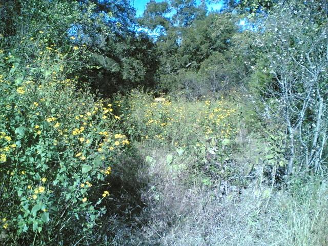 hole 6 overgrown
