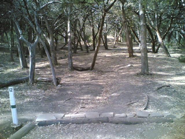 Pease Park #4