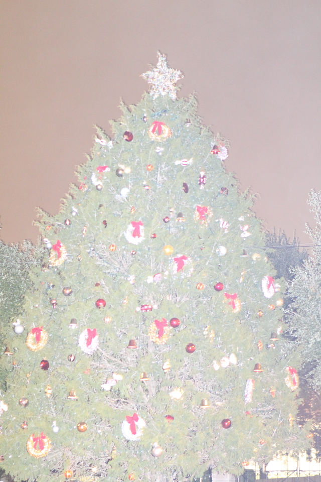 Foggy Christmas Tree
