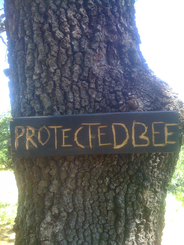 protected bee